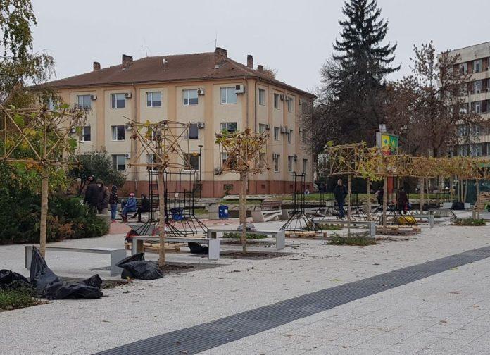 Дървета в центъра на Плевен