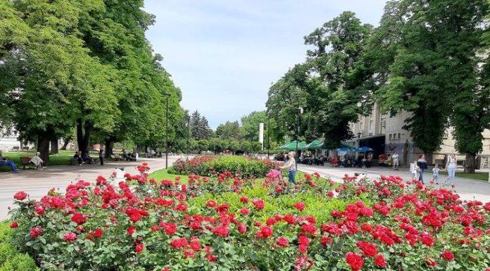Градска градина с рози